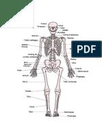 Anatomi Tubuh Manusia-1
