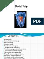 1 Dentalpulp