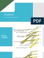 Anatomi SST.pptx