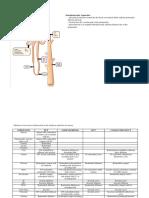 Tubular Reabsorption.docx