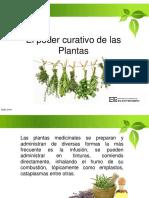 Charla Plantas