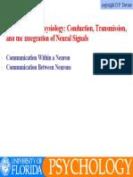 Neurophysiology.pdf