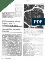 Degradación de almidón.pdf