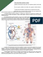 Revisão Circulatório Linfático Sangue