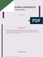 Patagonia organiza.pptx