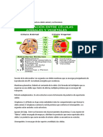 Funciones Dem La Celula Animal y Vegetal