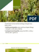 ANTHOCEROTOPHYTA atau lumut tanduk.pptx