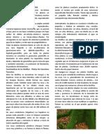 PLANTAS NO VASCULARES.docx