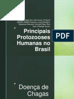 Principais Protozooses Humanas No Brasil