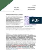 PenicilliuM.docx