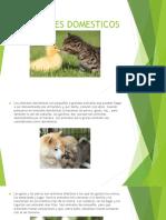ANIMALES DOMESTICOS.pptx