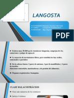 Langosta EXPO.pptx