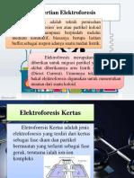 PPT Elektroforesis kertas.pptx