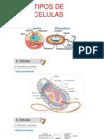 Clase 2 Diversividad Celular Células Procariontes y Eucariontes