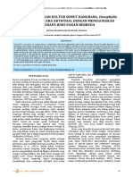 Kuantitas Anakan Kultur Semut Rangrang Oecophylla