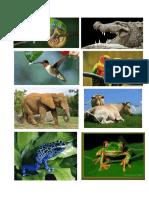 ANIMALES ANFIBIOS.docx