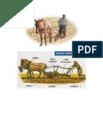 Características de la agricultura tradicional y moderna.docx