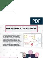 Copia de Diapositivas Biocel