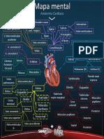 Mapa mental Anatomia Cardíaca