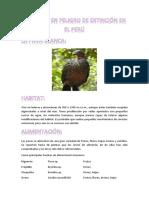 Animales en Peligro de Extinción en El Perú