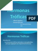 hormonatrficas-1215817793647041-9 (PPTshare)