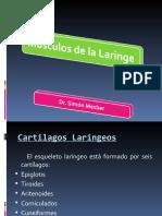 laringe-1217541549860102-8 (PPTshare)