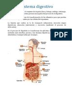 Sistema digestivo 1.docx