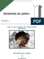 Aula metabolismo de lipídeos.pptx