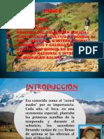 quinua expo.pptx