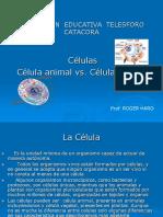 celulas-vegetal-y-animal.ppt