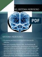 Bases del funcionamiento del sistema nervioso
