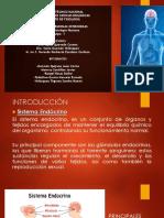 Hormonas Tiroideas p4