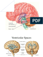 Brain Illustrations July_2015.ppt