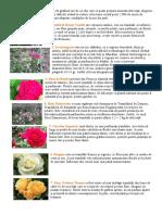 trandafirii dulceata.pdf