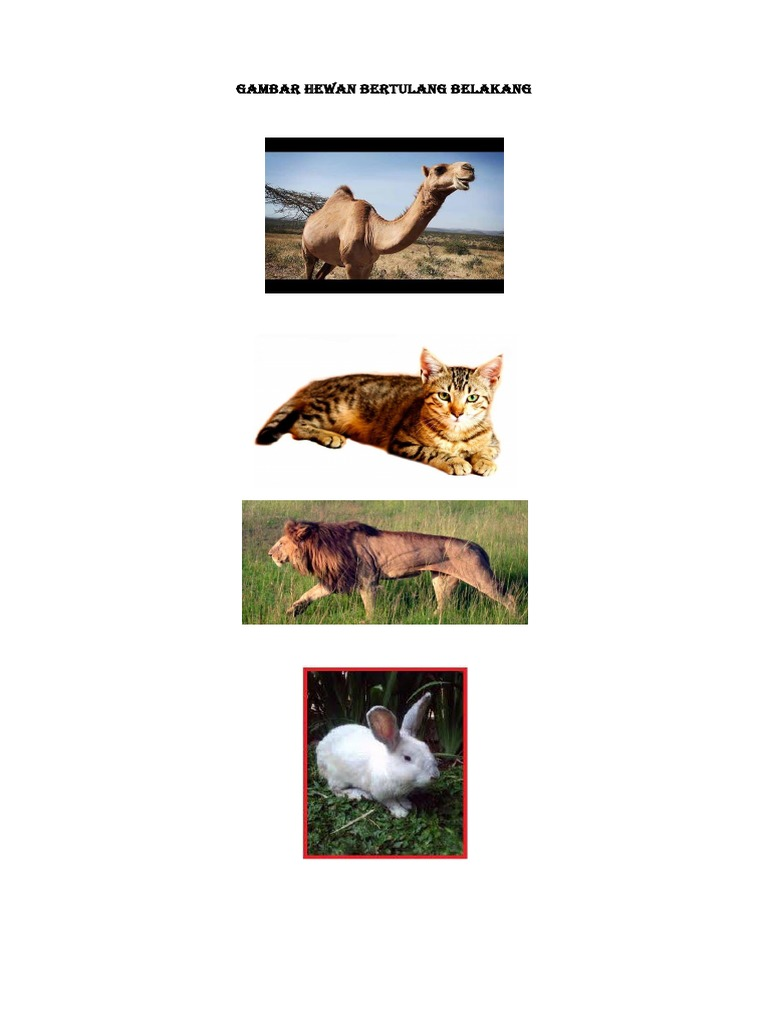 920 Gambar Hewan Yang Bertulang Belakang HD Terbaru