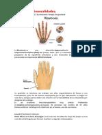 Amaranto- Protocolo de intervención de T.O. en Rizartrosis.docx
