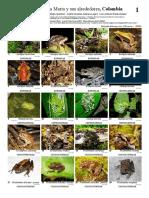 anfibios de santa marta y sus alrededores.pdf