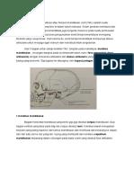Anatomi TMJ.docx