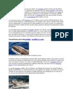 baleines.docx