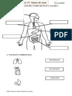 Partes del cuerpo clase 1.docx