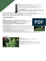 5 plantas medicinales.docx