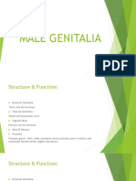 Male Genitalia Assessment (incomplete)