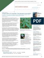 ¿Cómo Afecta El Cannabis a Las Sinapsis Neuronales_ _ Noticias _ Investigación y Ciencia