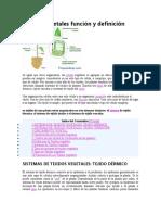 Tejidos vegetales función y definición.docx