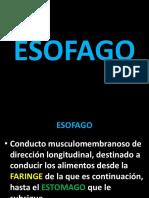 Esofago Bueno 2