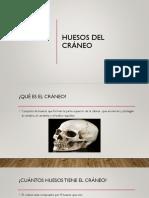 8 Huesos Del Craneo