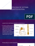 Fisiopatologia de Sistema Somatosensorial