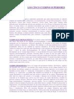 55274580-Los-Cinco-Cuerpos-Superiores.docx