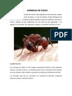 HORMIGAS DE FUEGO.docx