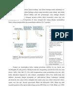 Auksin adalah redistribusi lateral di tudung  akar Selain berfungsi untuk melindungi sel.docx